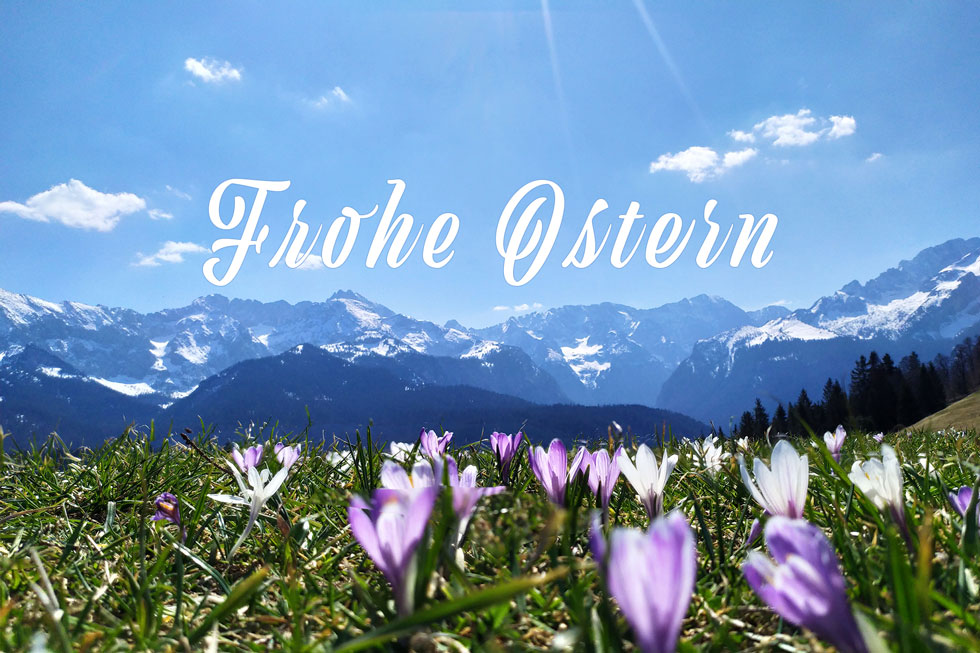 Krokus in der Alpenwelt