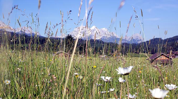 Sommerwiese mit Zugspitze